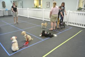 doggie-games-2
