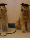 Dog Obedience Training Nh